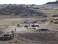 Hauts plateaux d'Ethiopie-Région Amhara (6).jpg