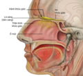 Head Olfactory Nerve Labeled vi.png