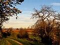 Herbst am Rebhang.JPG