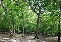 Highgate Wood 20170623 153245 (49400824626).jpg