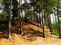 Hill - panoramio (9).jpg