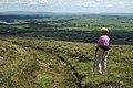 Hillside Track to Dunsop Head - geograph.org.uk - 1979381.jpg