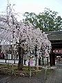 Hirano Shrine 平野神社 - panoramio (4).jpg