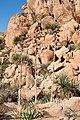Homalonychus habitat, vic Mtn Palm Springs (4301701254).jpg