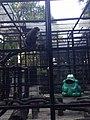 Hong Kong Zoological and Botanical Gardens 04.jpg