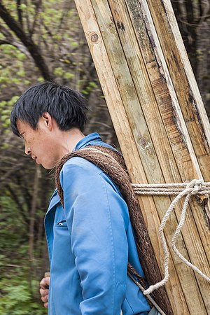 Sichuanese people - A local Sichuanese worker, carrying timbers for walkways at UNESCO World cultural heritage site at Huanglong, Sichuan, China.