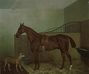 Hunting horse and dog in stable interior