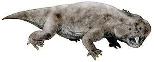 Archosauromorpha - Image: Hyperodapedon BW2 white background