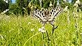 IMG-20200505-WA0009 butterfly.jpg