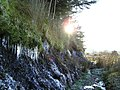 Icicles in the Forest - geograph.org.uk - 1100232.jpg