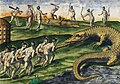 Illustration from Grand Voyages by Theodor de Bry, digitally enhanced by rawpixel-com 19.jpg