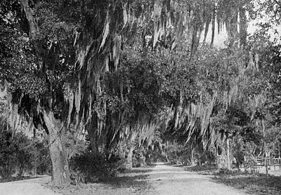 In Bonaventure Cemetery Savannah - A Thousand Mile Walk to the Gulf.jpg