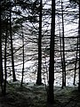 In the Trees - geograph.org.uk - 1160624.jpg