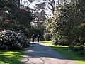 In the grounds of Mount Stewart (5) - geograph.org.uk - 762926.jpg