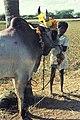 India-1970 067 hg.jpg