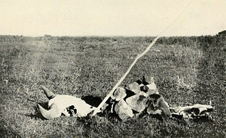Arikara scouts - A reconstruction of an Sign left by the Dakotas on their trail