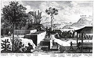 Jean-Baptiste Du Tertre - Engraving by Jean-Baptiste Du Tertre about an  Indigoterie from his work l'Histoire générale des Antilles habitées par les Français' from 1667