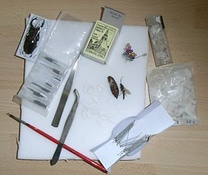 Entomological equipment for mounting and storage - Image: Insect Collecting Equipment 2