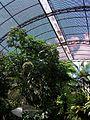 Interior de l'umbracle del Jardí Botànic de València.JPG