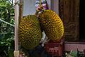 Jackfruit, Jember 2014-01-17.jpg