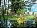 January Frost Botanic Garden Freiburg - Master Botany Photography 2014 - series Germany Diamond pictures - panoramio (9).jpg