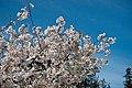 Japanese Friendship Garden (4526435181).jpg