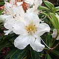 Japanese Gardens Flowers 5.jpg
