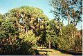 Jardin de Pamplemousses (3005311600).jpg
