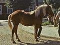 Jarmark – koń - Sokółka - 000723s (cropped).jpg