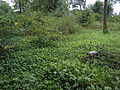 Jedwabno - cmentarz z I WŚ (03).jpg