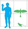 Jeholornis scale mmartyniuk wiki.jpg