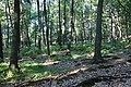 Jesienny spacer - panoramio (14).jpg