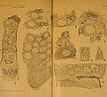 Journal of morphology (1909) (14587019538).jpg