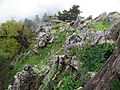 Karditsa subalipine vegetation.jpg