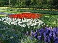 Keukenhof floranta 02.jpg