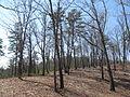 Kings Mountain National Military Park - South Carolina (8558901110) (2).jpg