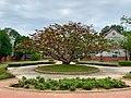 Kinmen Erythrina variegata.jpg