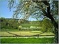 Kirschblüte - panoramio (12).jpg
