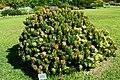 Kirstenbosch-010.jpg