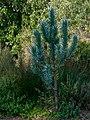 Kirstenbosch National Botanical Garden, Cape Town (P1060035).jpg