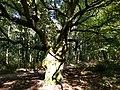Klein Leeuwenhorst - Tree.jpg
