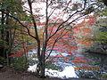 Kobe Municipal Arboretum in 2013-11-16 No,23.JPG