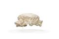 Kokerskemössa av vit bomullslinong - Hallwylska museet - 89287.tif