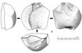 Kombewa core (nucleus).png