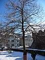 Krimlinde Winter.JPG