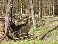 Kromme sloot door het bos - panoramio.jpg