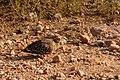 Kruger National Park (34843011251).jpg