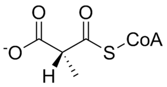 Methylmalonyl-CoA mutase - Image: L methylmalonyl Co A