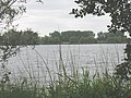 Lake at Nazeing Mead - geograph.org.uk - 1444107.jpg