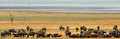 Lake manyara 2012 authorBevanda Wegmann4.png